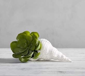 Pottery Barn Faux Potted Succulent In Shell