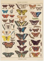Cavallini Decorative Wrap 20X28 Nat History Butterflies