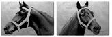 Oliver Gal Winning Horse (Set of 2) (Canvas)