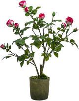 SIA Potted Roses - Fuchsia