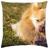 """iRocket - Dog - Throw Pillow Cover (18"""" x 18"""")"""