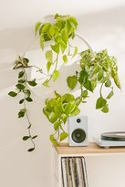 Urban Outfitters Multi Herb Wall Planter