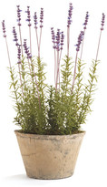 "Napa Home And Garden French Lavender 21"" Potted"