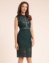 Bardot Lace Panel Dress