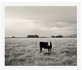 Pottery Barn Young Cow Framed Print by Jennifer Meyers