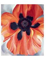 """McGaw Graphics Poppy, No. VI, 1928 by Georgia O'Keeffe, Art Print Poster, Paper Size 11"""" x 14"""" Image Size 10"""" x 12"""""""