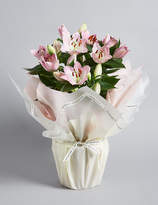 Marks and Spencer Gift-Wrapped Oriental Lily