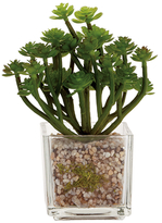 Torre & Tagus Potted Echeveria Vase