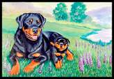Caroline's Treasures 7141JMAT Rottweiler Indoor or Outdoor Doormat