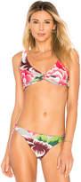 Salinas Betsy Bikini Top