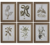 Uttermost Variegated Plants 6-Pc. Print Wall Art