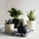 west elm The Sill Planter + Plant - The August