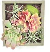 Gold Eagle Mixed Succulents Square Wall Planter