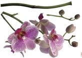 Freestyle 28 in. x 36 in. Orchids Wall Decal