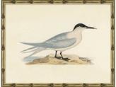 Soicher Marin Sea Bird 1