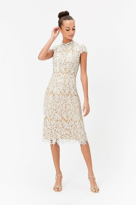 Coast Lace Sequin Midi Dress