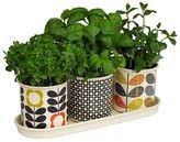 Orla Kiely 3-Piece Herb Pot Set on Tray