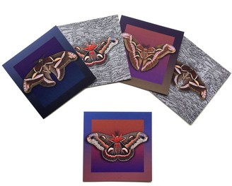 Arlette Ess Set of Five Textured Greeting Cards With Envelopes Assorted Giant Silkmoths