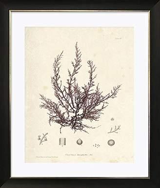 Photo Frames And Art Marine Botanicals I Framed Art Picture/Print In A Black Frame - Glass Front - Outside Measurements 51 x 43cm