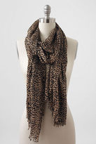 Lands' End Women's Lofty Printed Gauze Scarf