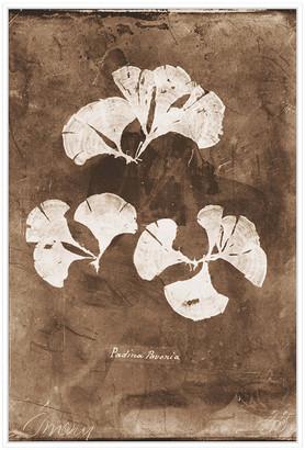Jonathan Bass Studio Natural Forms Sepia 4, Decorative Framed Hand Embellished Canvas