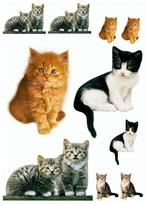 Freestyle 27 in. x 19 in. Kitty Wall Decal