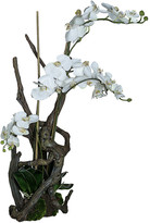 SIA Phalaenopsis Orchid & Branches