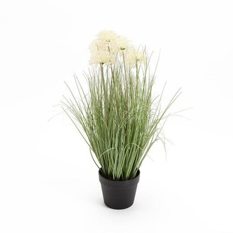 Chickidee - Grass Plant With Allium Flowers