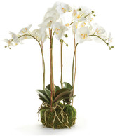 "Napa Home And Garden Phalaenopsis 25"" Bowl Drop-In White"