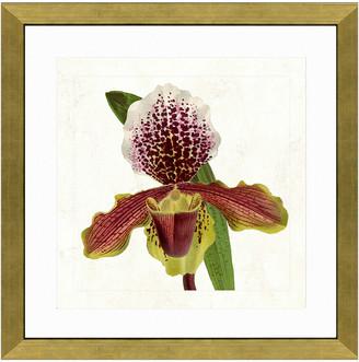 Vintage Print Gallery Graceful Orchid I Framed Graphic Art