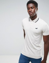 Hollister Polo Tipped Pique Icon Logo Slim Fit In Cream