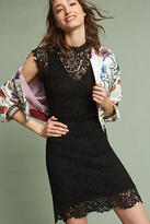 Velvet by Graham & Spencer Allegra Lace Dress