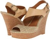 BC Footwear Chihuahua