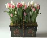 Tulips in Antique Trug