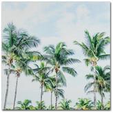 Trademark Fine Art Brookview Studio 'Southern Palms' Canvas Art, 24 x 24