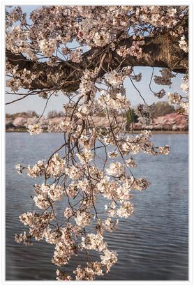 Jonathan Bass Studio Cherry Blossoms 4, Decorative Framed Hand Embellis