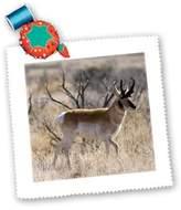 3dRose LLC qs_83717_4 Danita Delimont - Antelopes - Antelope - NA02 DFR0030 - David R. Frazier - Quilt Squares