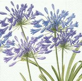 Caspari Agapanthus Paper Dinner Napkins, Pack of 20