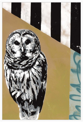 Jonathan Bass Studio Barred Owl Ii, Decorative Framed Canvas Art