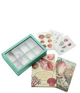 American Museum of Natural History Seashell Collector Kit