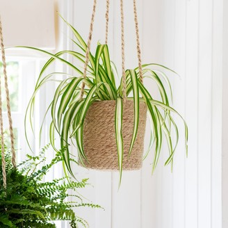 The Living Lounge - Pot - Jute Hanging macrame planter. - Natural