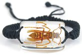 The Real Insect Co. Yellow Jacket in Lucite Bracelet Bug Jewelry New