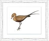 "One Kings Lane Sea Bird IV Art - 13""L x 19""W"