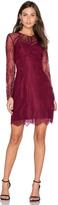Greylin Shirley Lace Dress