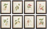 OKA Framed Exotic Fruit Prints, Set of 8