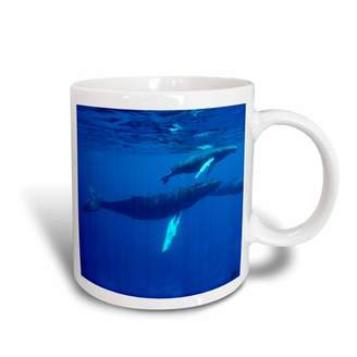 Breed 3drose 3dRose North Atlantic Humpback Whales migrate south to the Silver Banks to and have their calves, Ceramic Mug, 11-ounce