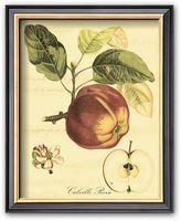 "Art.com Petite Tuscan Fruits I"" Framed Art Print"