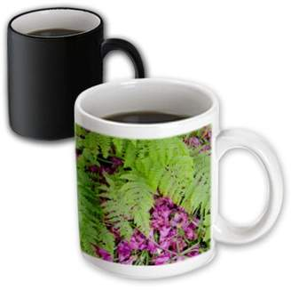 3drose 3dRose Scotland, Isle of Skye, Forest flora - EU36 CMI0399 - Cindy Miller Hopkins, Magic Transforming Mug, 11oz
