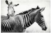 Pottery Barn Zebras Framed Print by Lupen Grainne