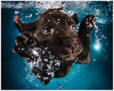"""Empire Art Direct """"Black Lab"""" Dog Wall Art on Frameless Free Floating Tempered Glass Pan"""